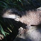 Lizard at Taronga Zoo by lettie1957