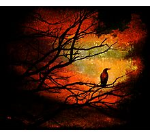 Basho's Crow Photographic Print