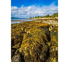 Seaweed on the Beach Photographic Print