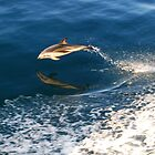 Dancing Dolphin  by hdimages