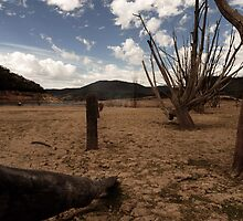 The Fence Line by Michael Alesich