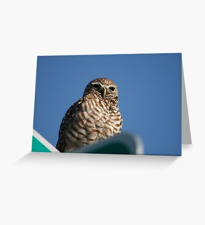 I'm Watching You Lady! Greeting Card
