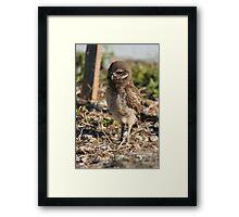 Burrowing Owl Baby #1 Framed Print