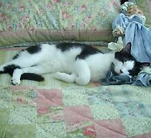 Momo the Cat sleeps with dolls by janetmarston