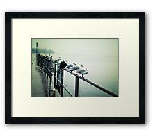 Seagulls 1 Framed Print