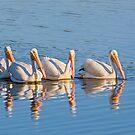 Pelican Quartet by Kenneth Keifer