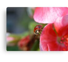 Ladybug II Canvas Print