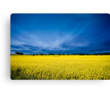 Golden Canola Canvas Print