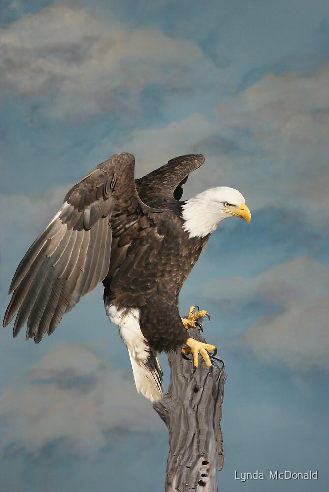 Sky Eagle Tribute - Collaberation by Lynda   McDonald