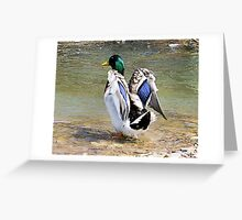 Show off Greeting Card