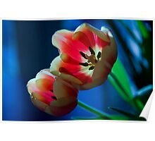 Surreal Tulips Poster