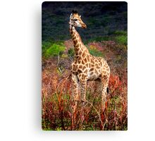 YOUNG GIRAFFE - SOUTH AFRICA Canvas Print