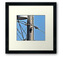 Telephone Repair Man Framed Print