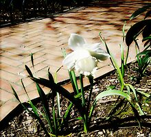 Put an Arm down on the Earth and another one to the Sky: The Daffodil Principle by WaleskaL