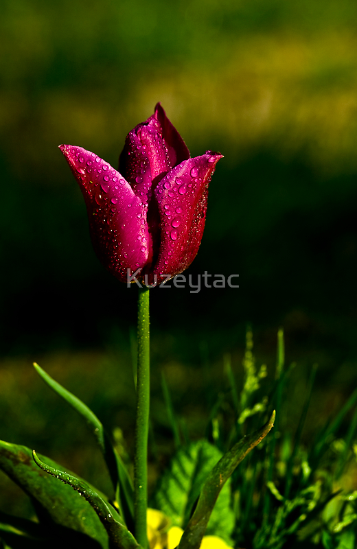 Only You by Kuzeytac