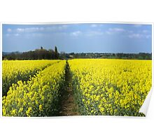Rapeseed Poster