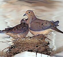 Father Dove with young by mstinak