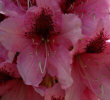 Spring Rhodie by Laddie Halupa
