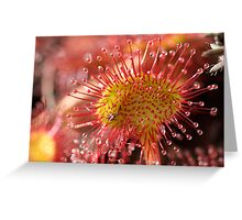 Sundew Greeting Card