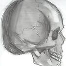Skull - Side view by enelyawolfwood
