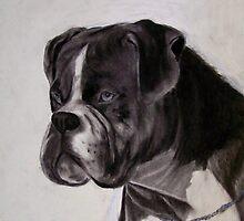 Boxer by Dandelion Dilluvio