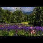 Geese Over Lupine Field Poster by Wayne King