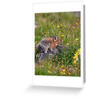 Pika & Wildflowers Greeting Card