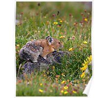 Pika & Wildflowers Poster