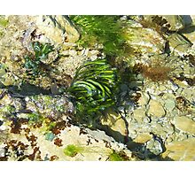 Rock pool life Photographic Print
