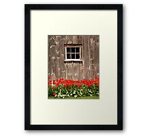 Red Tulips & Barn Framed Print