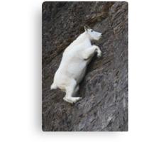 Mountain Goat on the Edge Canvas Print