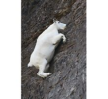 Mountain Goat on the Edge Photographic Print