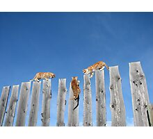 Hang in There Kitty! Photographic Print