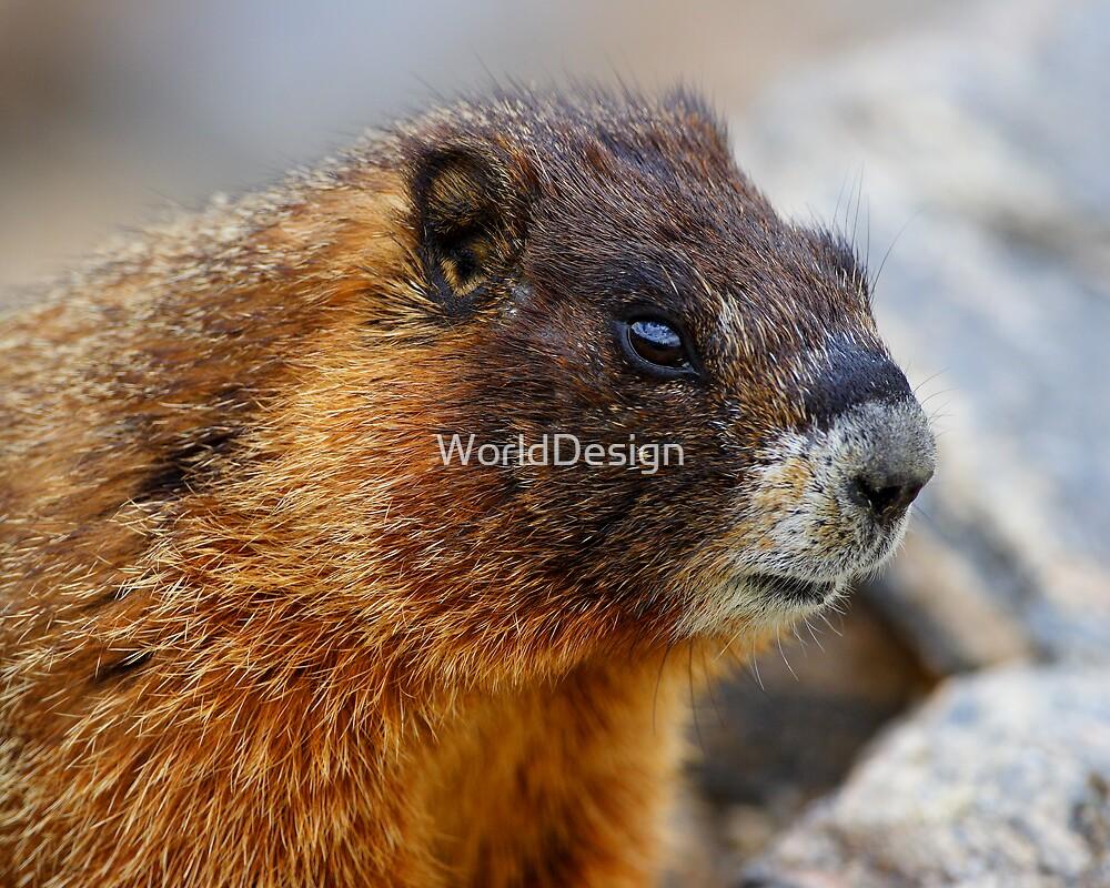 Marmot Portrait by William C. Gladish