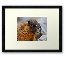 Marmot Portrait Framed Print