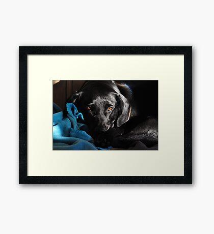 Marlie in Natural Light Framed Print
