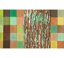 Silky Oak Bark (Detail Section 3b), On the Outer ~ Tree Trunk Extracts  Photographic Print