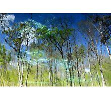 Ichetucknee Reflections Photographic Print