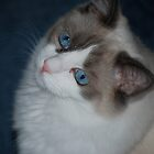 My Beautiful, Beautiful Blue Eyes... by Carol Clifford