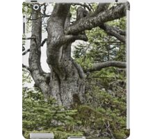 Old twisted tree iPad Case/Skin