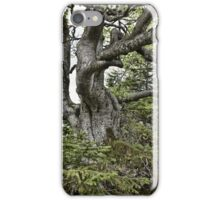 Old twisted tree iPhone Case/Skin