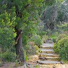 Treescape - Evans Lookout NSW by Bev Woodman