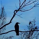 Blackheath Black Bird by Bev Woodman