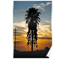 Tall Palm Silhouette at Sunset Poster