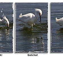 egret fishing triptych by Celeste Mookherjee
