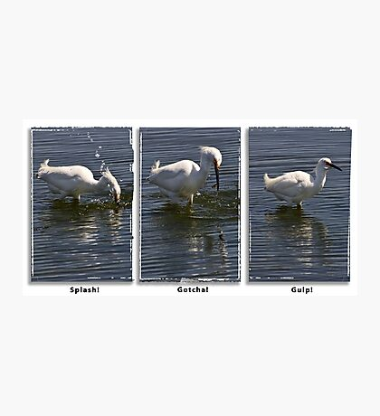 egret fishing triptych Photographic Print