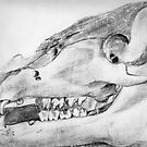 Skull Bones of a Boar - I by Maren Spreemann