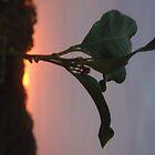 leafy by wilde-child
