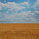 In the wheat field by paulmcardle