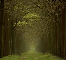 Grass Lane by LarsvandeGoor